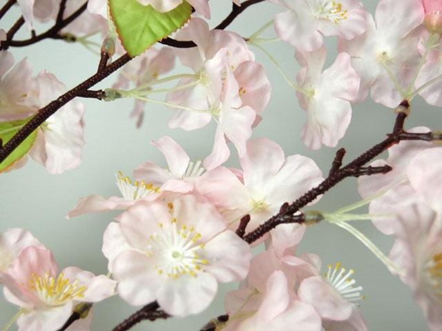 桜大枝のアップ