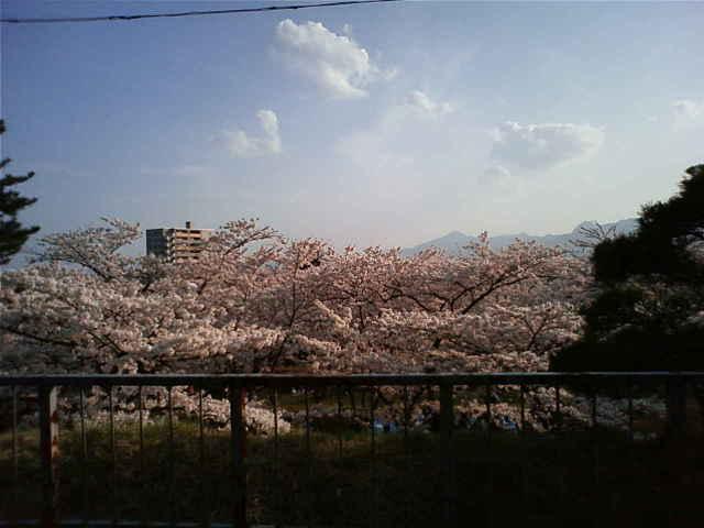 岩手公園桜2010.5.03